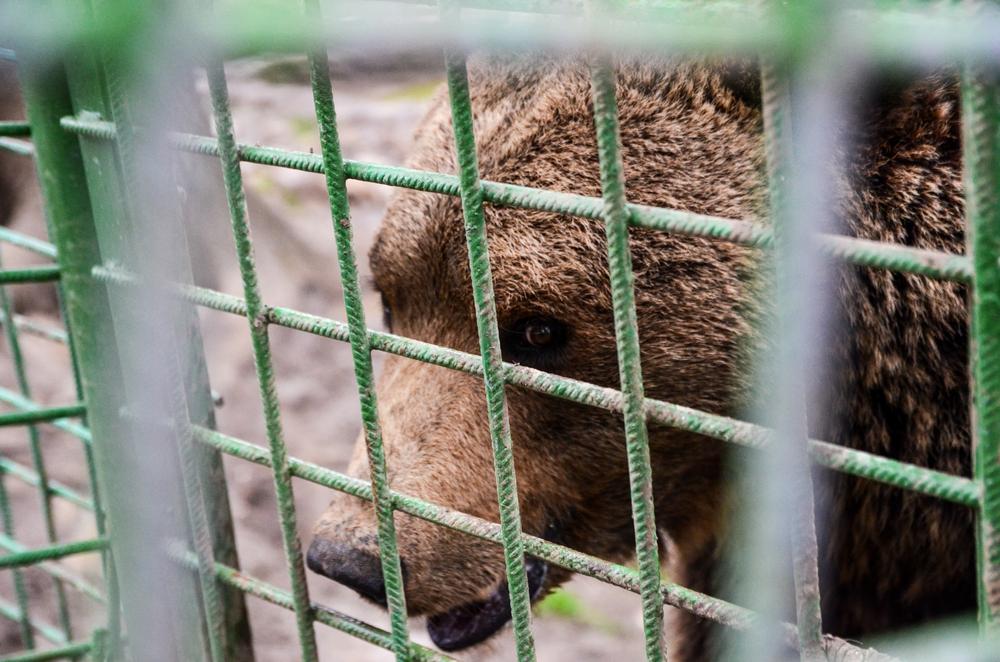 Preventing Animal Cruelty: Animals in Entertainment